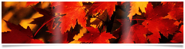 red-fall-leaves-banner