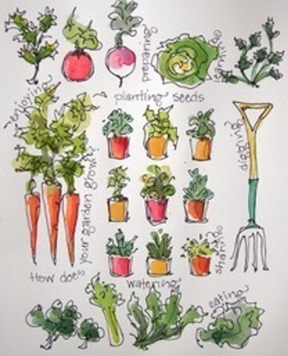 Vegetable Gardening 101 All You Need To Know