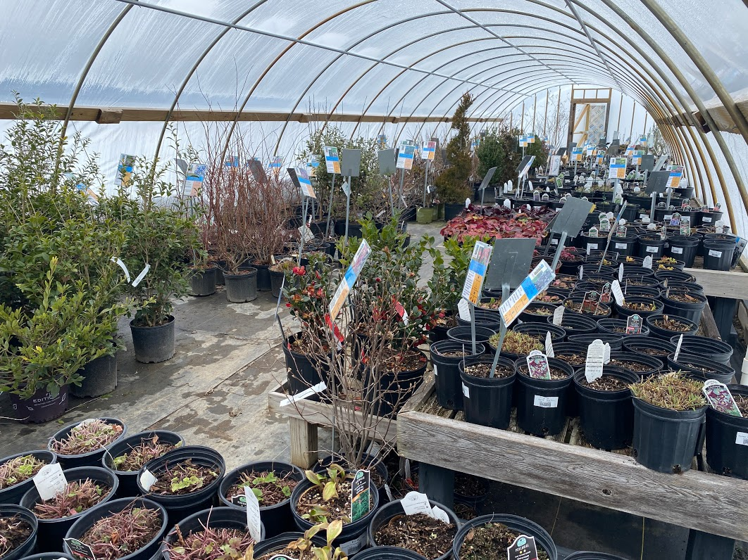 Inside our front retail hoop house
