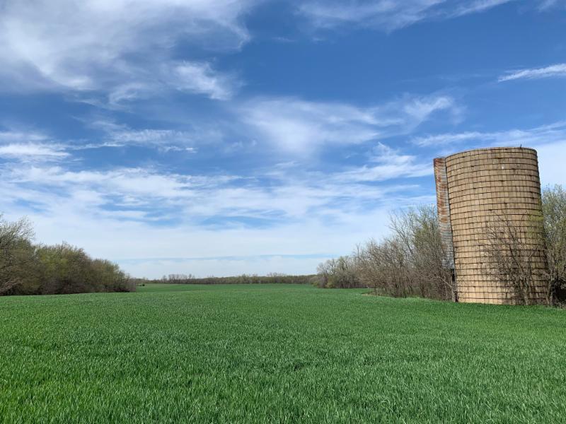 From the field – Kansas Wheat Alliance