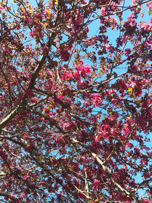 Time to look up! The trees are starting to bloom.