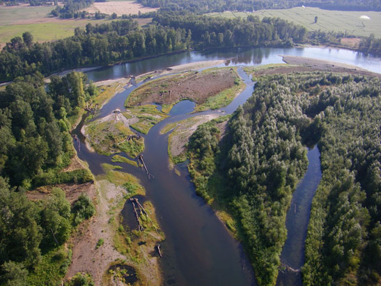 Aerial photo of Green Island floodplain - Willamette River. Photo by Marty Nill