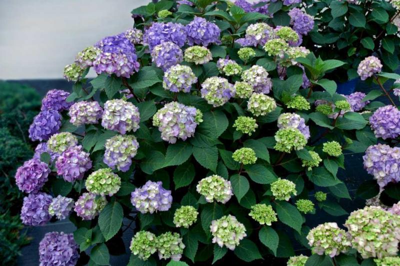 BloomStruck flowers