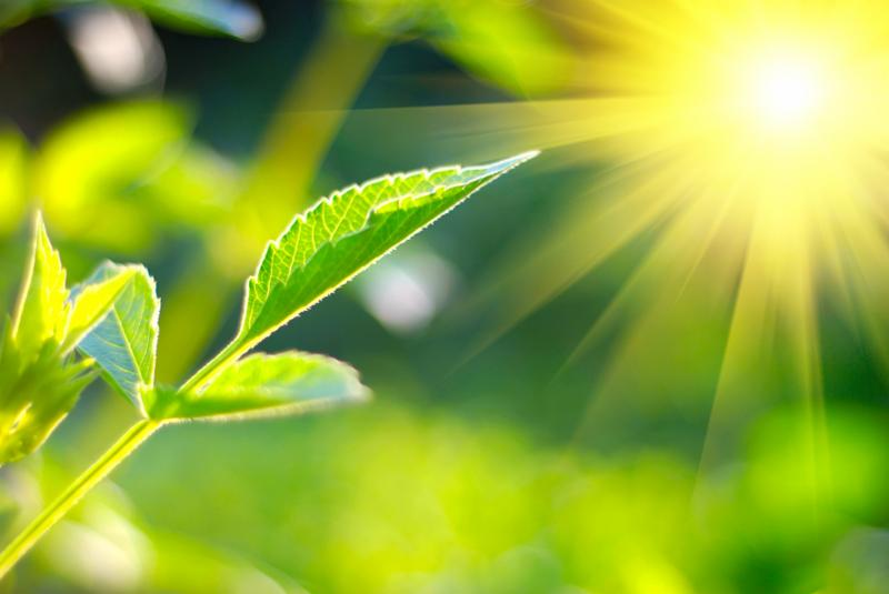 Fresh green leaf is highlighted by sun. Note Slight blurriness, best at smaller sizes