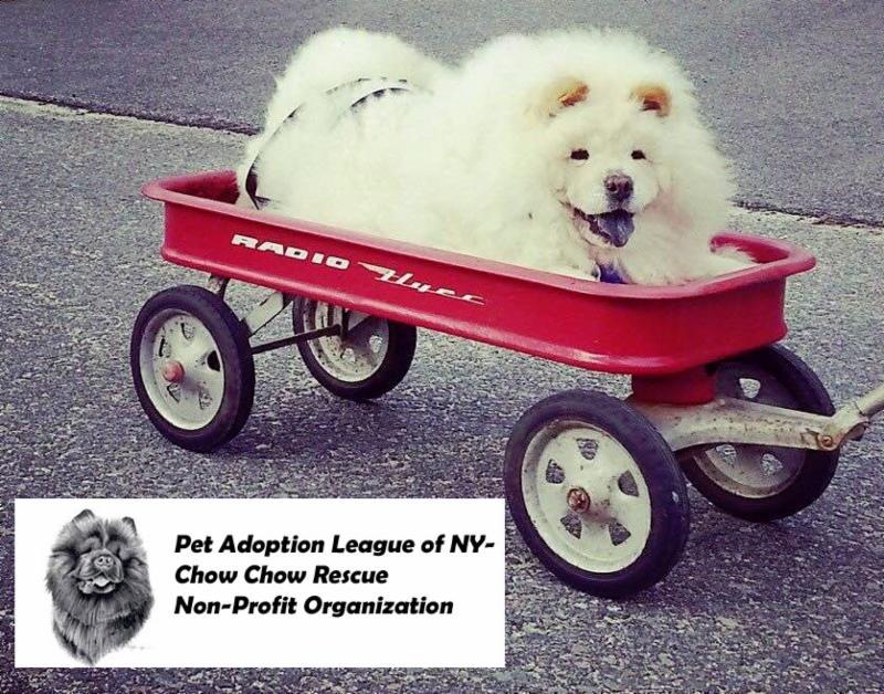 Pet Adoption League of NY