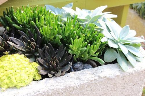 Cactus Succulents Container Garden Workshop