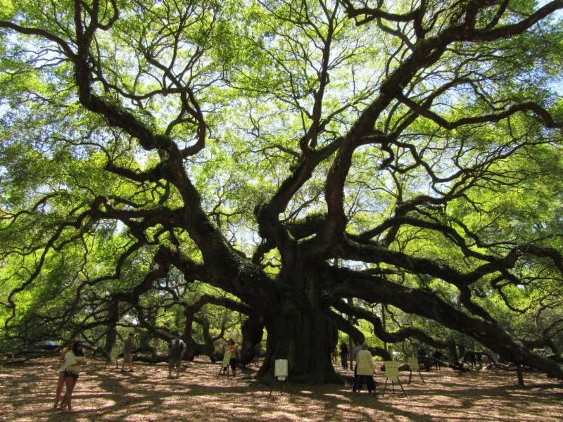 michael dirr manual of woody landscape plants