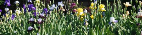 header iris bed