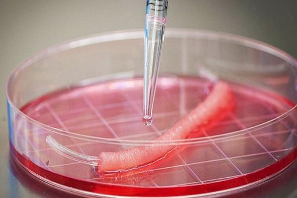 Engineering Tissue: Building Traps for Cancer with Biomaterials and STEM  Cells