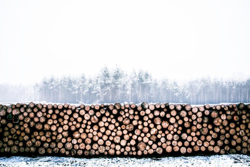 lumber photo