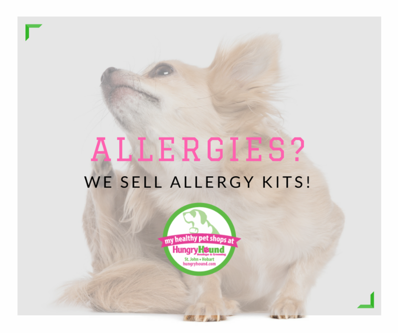 Has Your Dog Had An Allergy Test?
