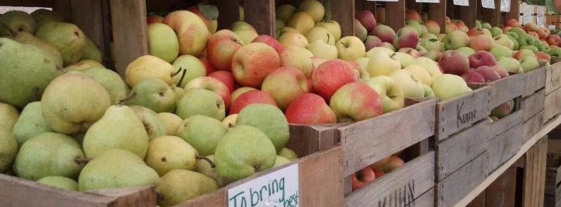 Fruit Blast -- A Dozen Apples!