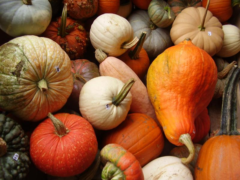 Pumpkins are here....Get ready to start decorating for fall!