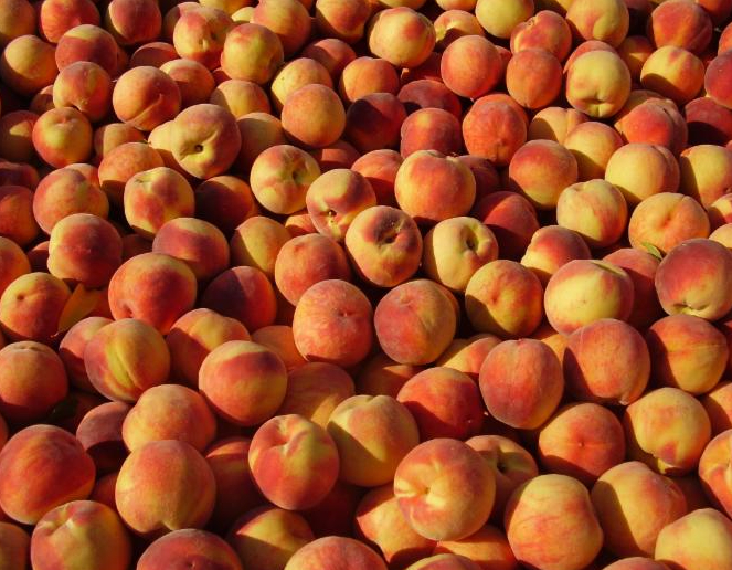 Thinking about canning peaches or tomatoes? Now is the time to preserve this summer's bounty!