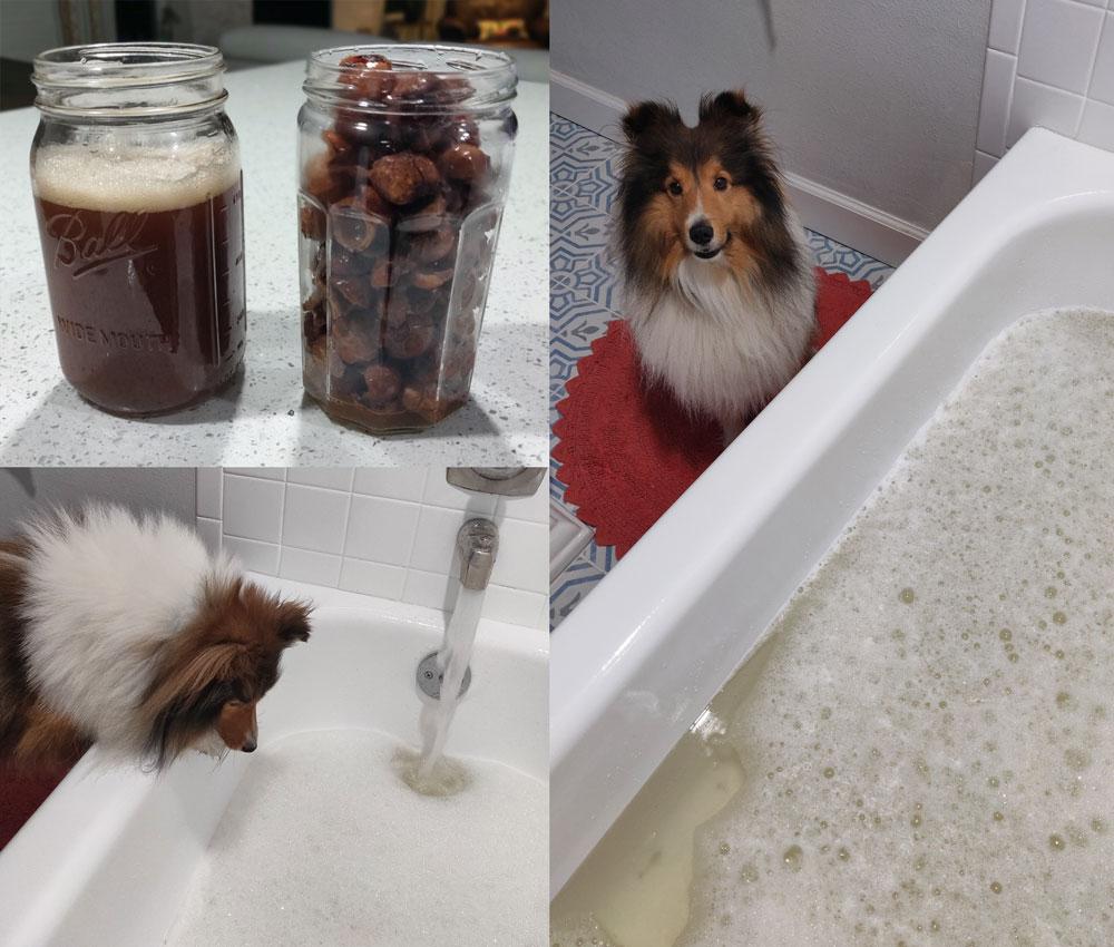 soapnuts-collage.jpg