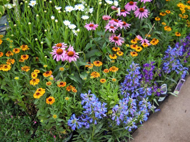 denver garden centers. 20% Off #1 Perennials Denver Garden Centers