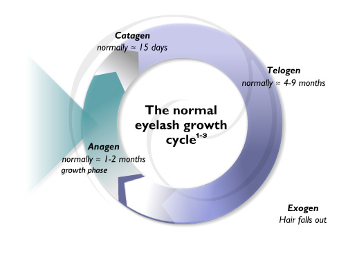 eyelash growth