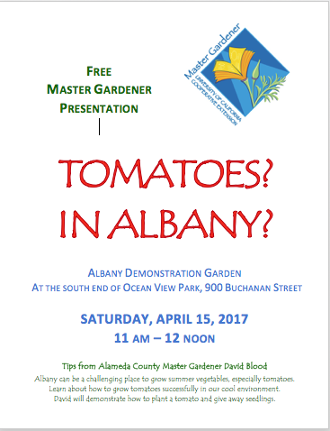 Tomatoes in Albany?!