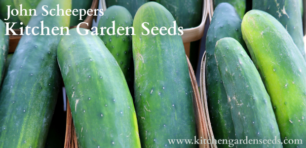 Direct-Sow It Now: Cool, Crunchy Cucumbers