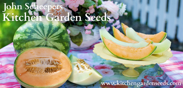 Sow It Now: Watermelons, Cantaloupes, Honeydews and more...
