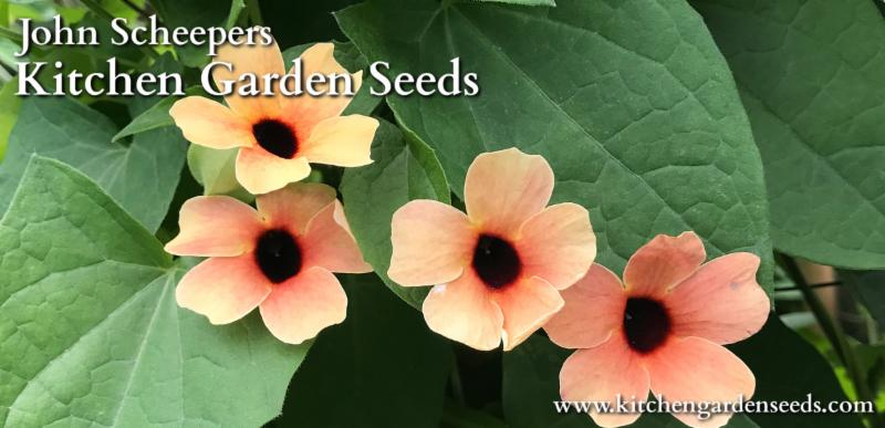 Direct-Sow These Flowers & Veggies NOW!