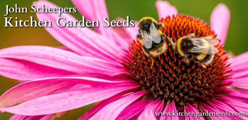 Create a Pollinator-Friendly Garden