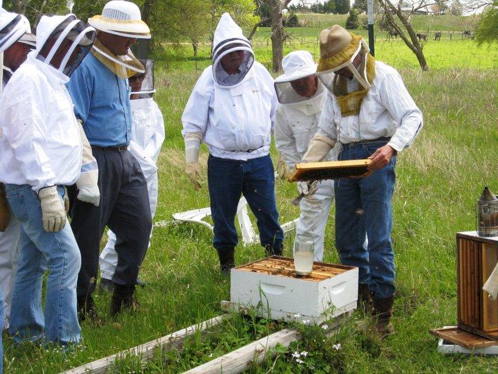Looking at hives