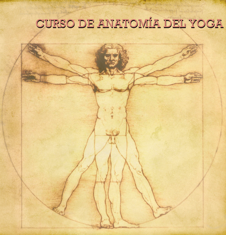 Dorable Anatomía Como Un Curso Motivo - Anatomía de Las Imágenesdel ...