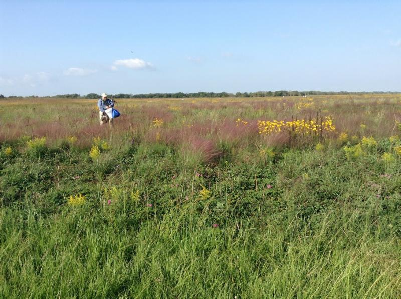 Seed Collecting at Nash Prairie, 10-12-15
