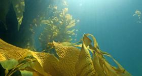 Seaweed and Skin Cancer