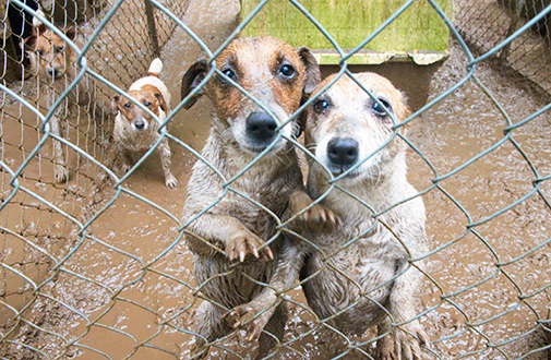 Image of puppy mill