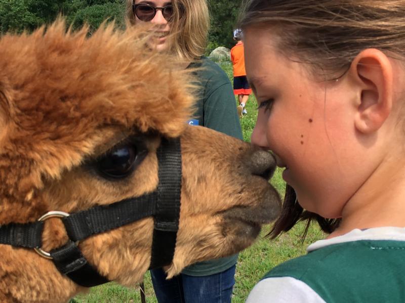 alpaca kiss!