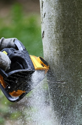 Landscapers & Tree Trimmers