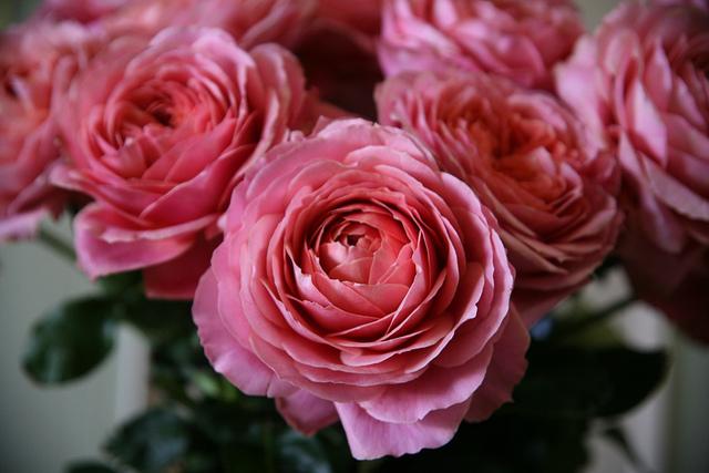 California Pajarosa Floral's garden roses