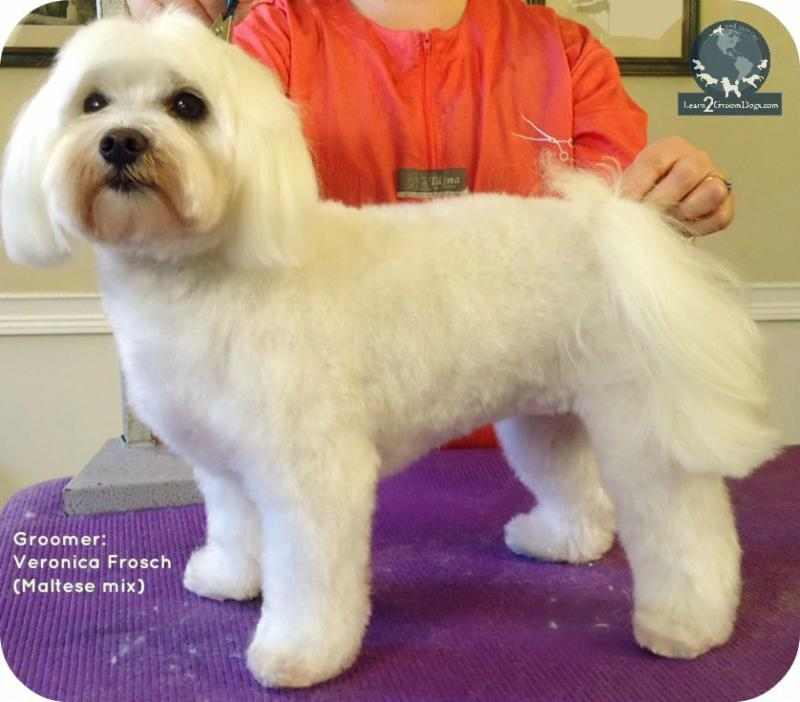 I Want A Puppy Cut Learn2groomdogs