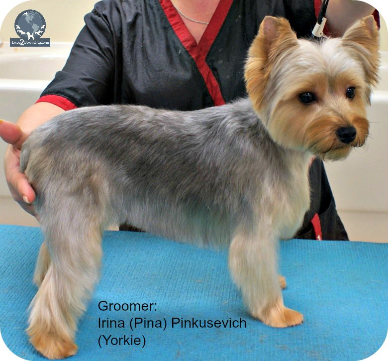 Pet Grooming Archives Learn2groomdogs Com