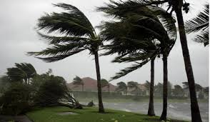 Palm Hurricane