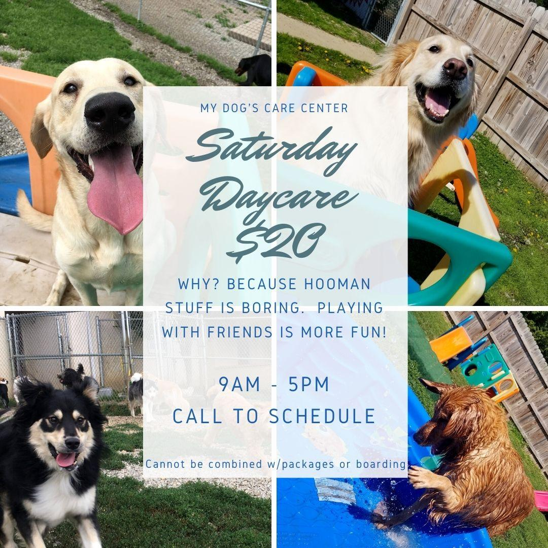 Saturday Daycare summer 2020.jpg