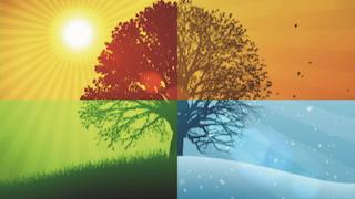 albero 4 stagioni