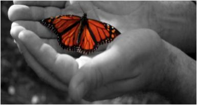 farfalla in mano