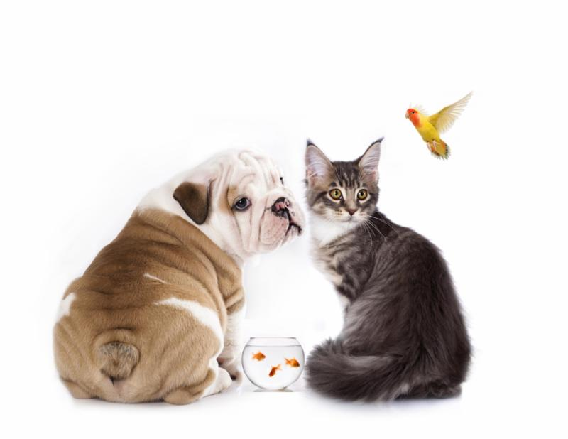 Wonder Tails Of Dogs And Cats
