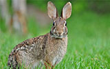 Tips For Keeping Rabbits Out Of Your Garden