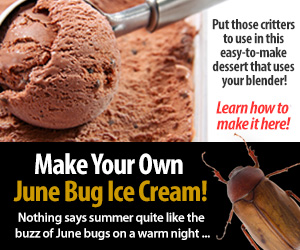 Make Your Own June Bug Ice Cream