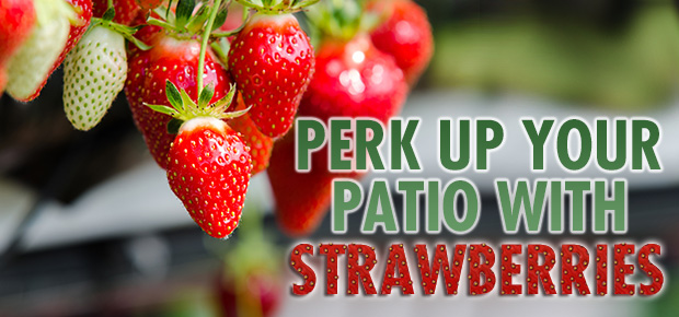Perk Up Your Patio With Strawberries!
