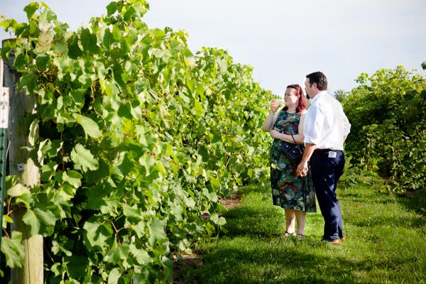 Uncork Vineyard