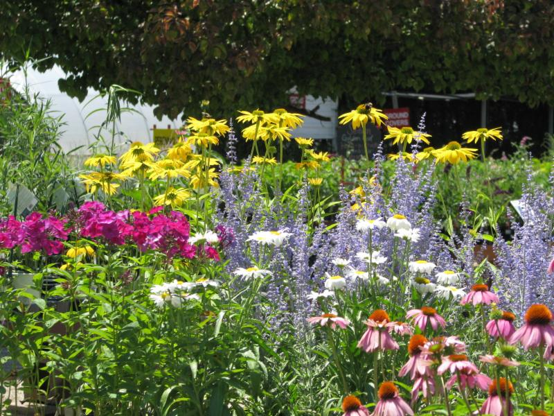 July 12 E News Perennials Trees Sustainable Landscapes