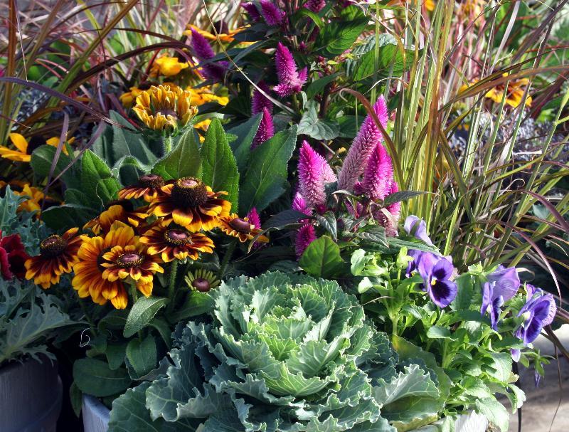 Flowering Container Garden