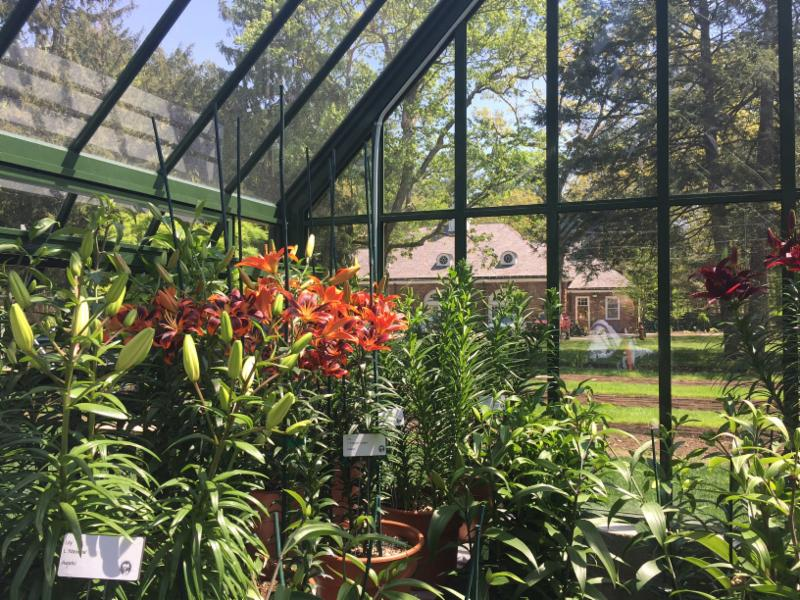 Outstanding Greenhouse Growing Download Free Architecture Designs Ogrambritishbridgeorg