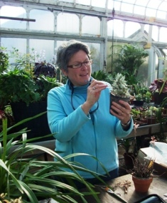 Carrie Waterman of Dover 'grooms' a plant she'll enter at Blooms! in March