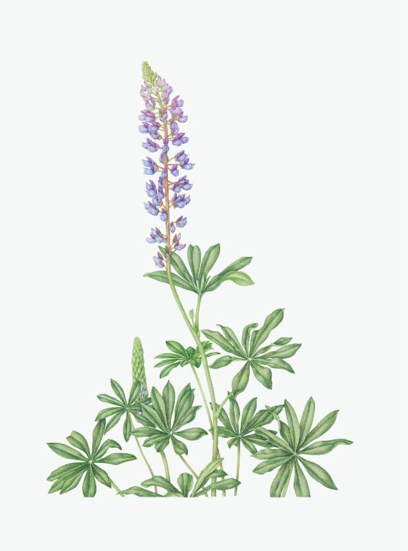 Mondays July 11 July 25 9 30 Am 3 30 Pm Wellesley College Botanic Garden Florilegium